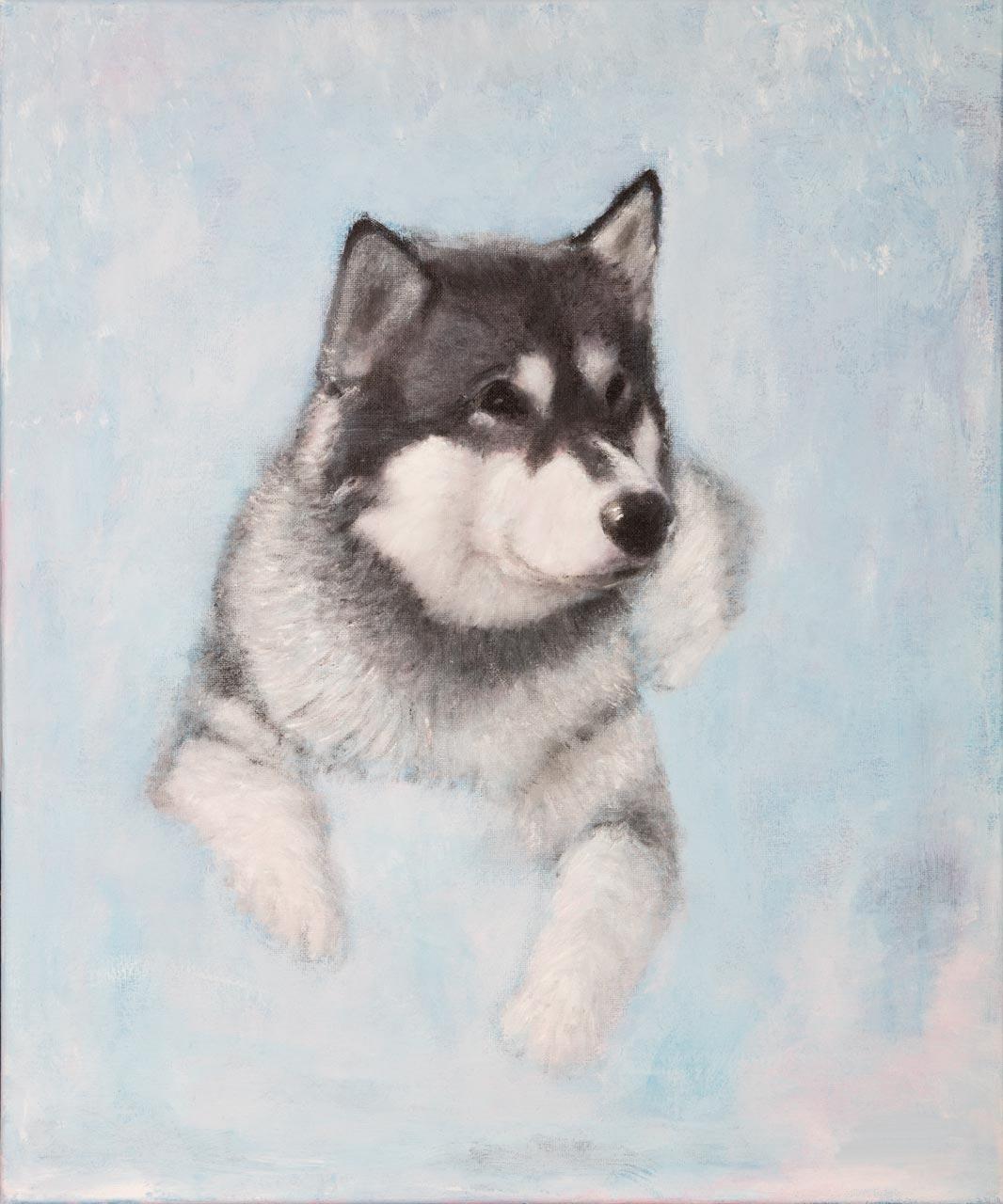 Alaska / Husky